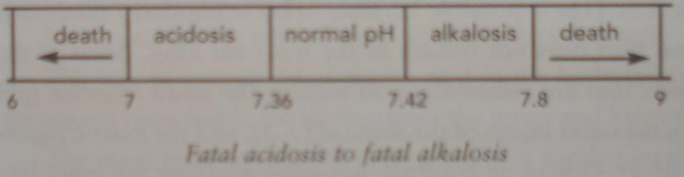 Fatal alkalosis 20070409.JPG