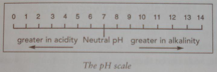 PH scale 20070409.JPG